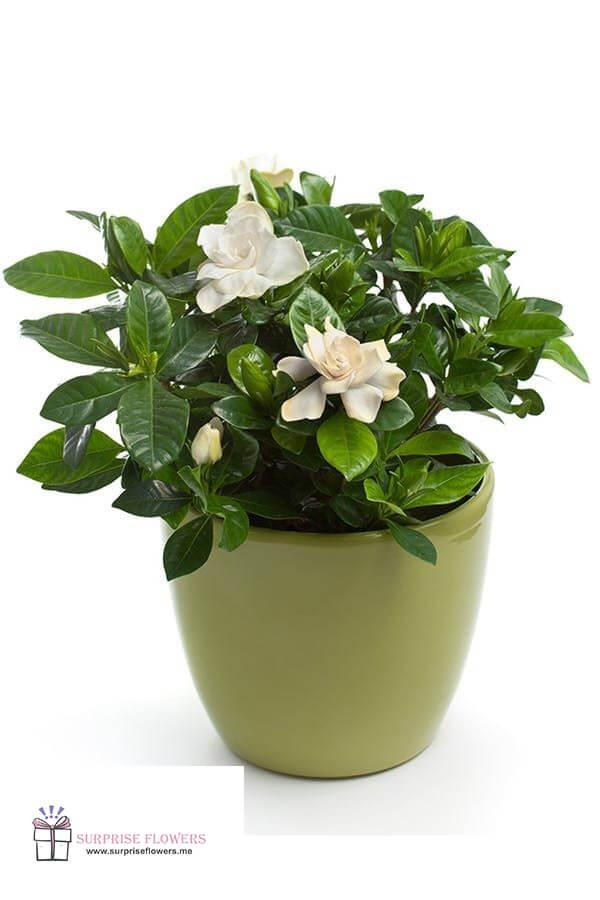توصيل نبتات وزهور الى عمان الاردن